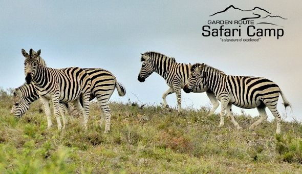 A 2 Night Stay for 2 People in a Luxury Tent or Family Room, including Breakfast at Garden Route Safari Camp!
